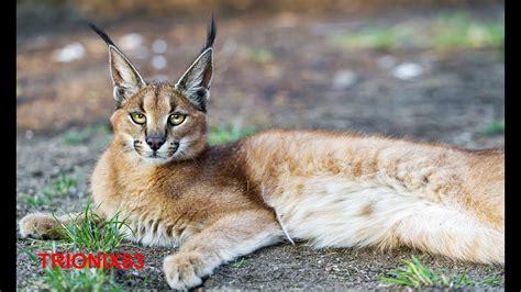 imagenes animales bonitas los animales mas bonitos del mundo que no sabias que
