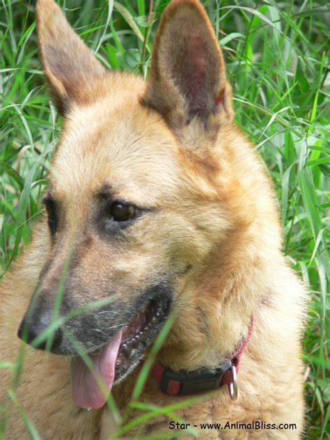 bone cancer in dogs fizzs amazing story osteosarcoma bone canine osteosarcoma bone cancer in dogs animal bliss