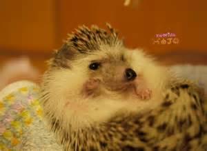 Home Design Games bath time for hedgehogs