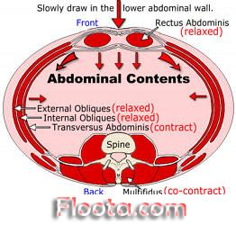 transversus abdominis exercise