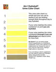 urine color chart meaning hydration urine color chart workout