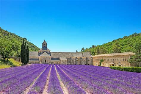 wann blüht der lavendel in frankreich wellness aus der provence opodo reiseblog