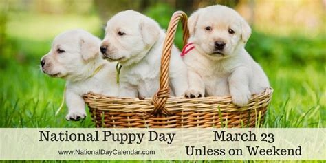 when is national puppy day national puppy day march 23 unless weekend national day calendar