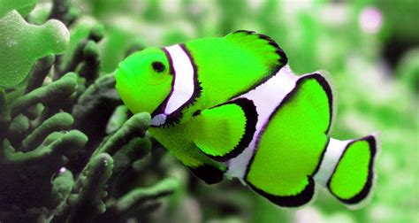Green World Sea Fish picture of sea fish on animal picture society