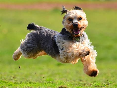 dogs to run with 6 tips for running with your rover