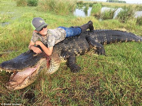 hunters catch and kill 15ft 800lb alligator that was
