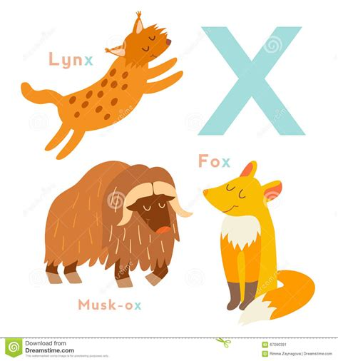 imagenes en ingles con x animales de la letra x fijados alfabeto ingl 233 s ilustraci 243 n