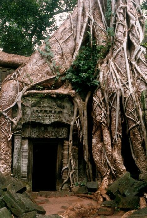 tree root house architecture pinterest