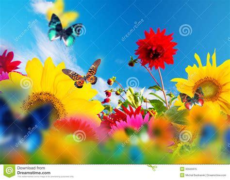 fiori per giardino soleggiato giardino soleggiato dei fiori e delle farfalle immagine
