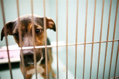 puppy shelters nyc shelters scramble after strep kills dogs ny daily news