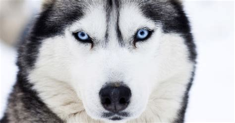 why are dogs color blind why do dogs go blind dogtime