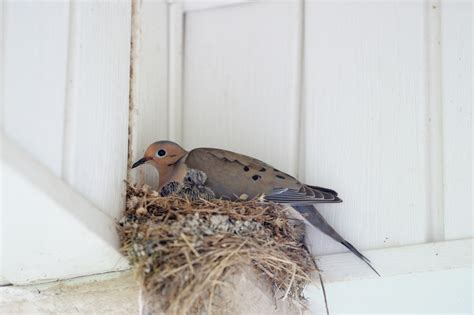 the right way to remove a bird s nest pest control long island