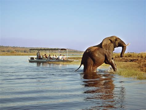 african safari south african tours and safari pembury tours
