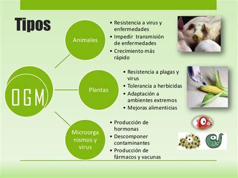tipos de alimentos transgenicos alimentos transg 233 nicos