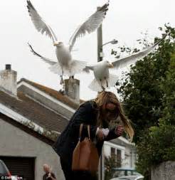 dive bomb terror in the gull de sac woman cowers as birds