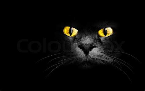 Caterpillar Ct11248 Free Box Yellow Black muzzle a black cat in the stock photo colourbox
