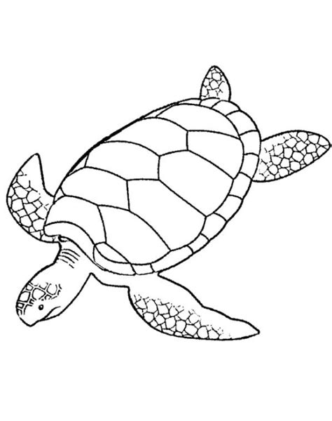 coloring page of a sea turtle sea turtle coloring page coloring book