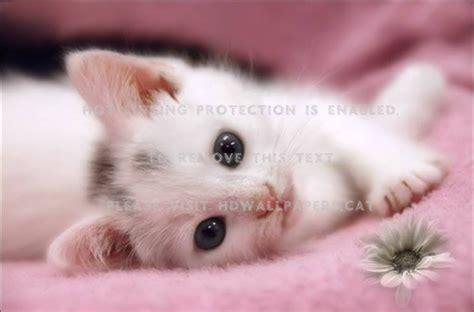 cute  sweet kitty pink  kitten
