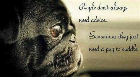 poems about pugs pug quotes and poems quotesgram