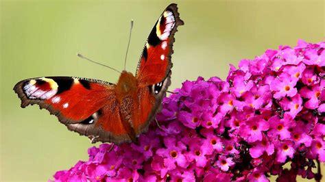 disegni di farfalle e fiori immagini di fiori e farfalle da colorare migliori pagine