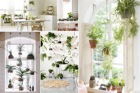 how to grow an amazing indoor garden with self watering wine 10 amazing indoor garden ideas to brighten your home desima
