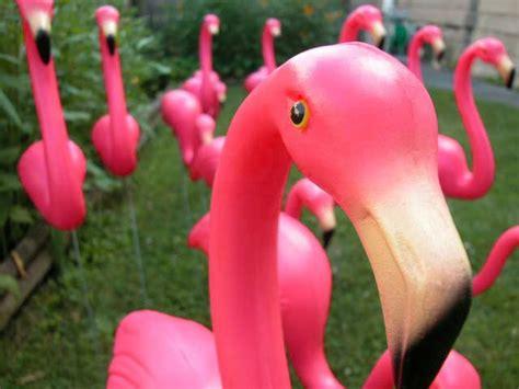 pink flamingos a flock of flamingos i am the lizard queen