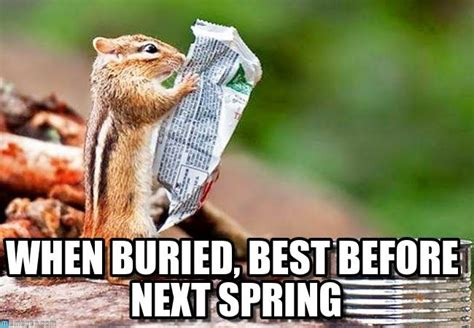 Chipmunk Meme - 17 best images about squirrels on pinterest baby