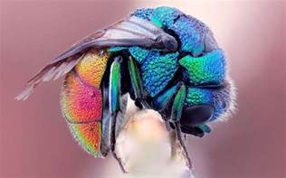 Galerry colored fruit flies
