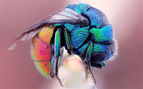 colorful insects 10 most beautiful and colorful insects in nature wow amazing