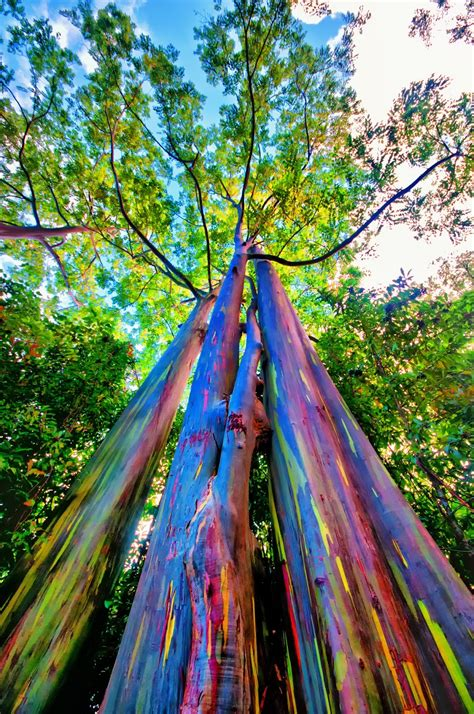 rainbow trees shutterbugs capturing the world around us rainbow