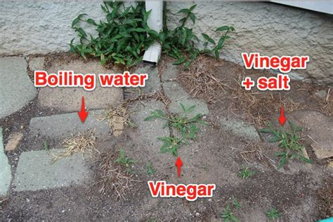 How To Kill Weeds On Patio by The Easiest Chemical Free Way To Kill Weeds Lifehacker
