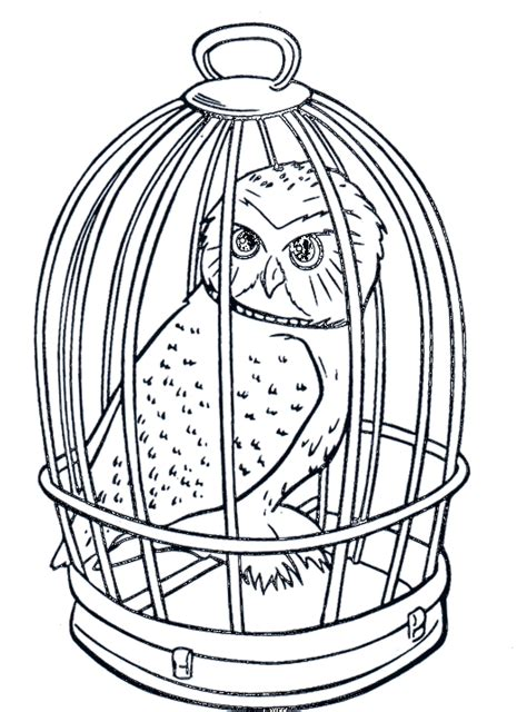 realistic owl coloring page white owl cigar tattoo coloring pages barn owls