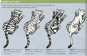 cat color patterns the breathtaking marbled bengal cat paragonbengals