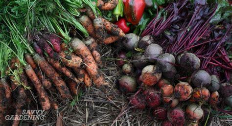 storing root vegetables root crop harvest
