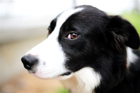 haired border collie puppies the dogs to look at when i feel blue haired border