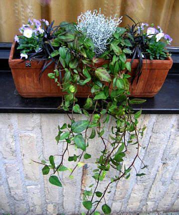 hang planten bloemen buiten bloembakken opvullen met winterharde planten