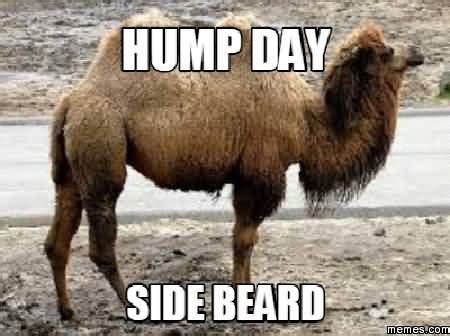 Dirty Hump Day Memes - hump day meme dirty 28 images hump mike mike mike mike
