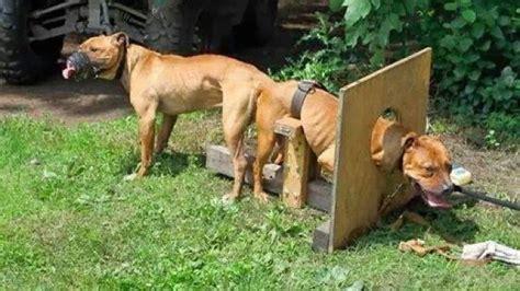 imagenes libres animales petici 243 n 183 mercadolibre prohibir las publicaciones de