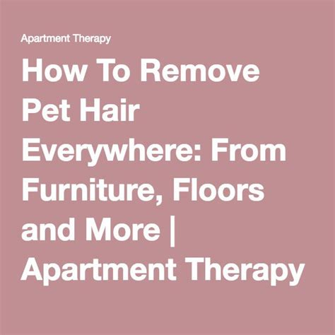How To Remove Pet Hair From by Remove Pet Hair How To Remove And To Remove On