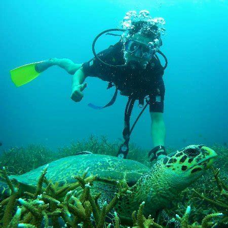 aqua dive dive dive dive abect aqua dive centre pulau tioman