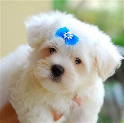 imagenes tiernas de amor para perfil de whatsapp whatsapp imagenes para perfil de lindos cachorros feliz