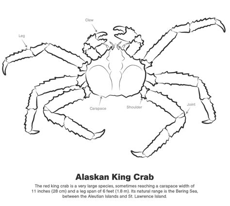 king crab coloring page color the king crab discovery kids az colorare