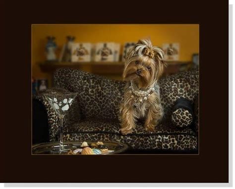 yorkie posters terrier prints posters paintings