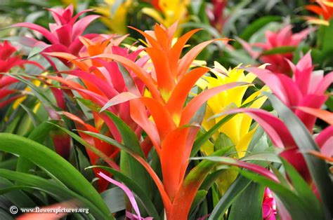 garden tips bromeliad plant care interior design inspiration