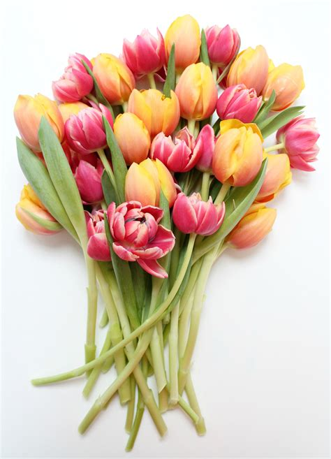 top 28 how to cut tulips home decor julianne hough