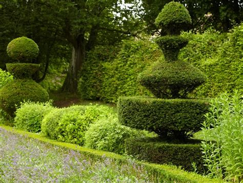 topiary shape shifters garden design