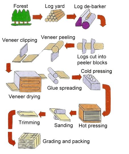 Process Of Paper From Wood -
