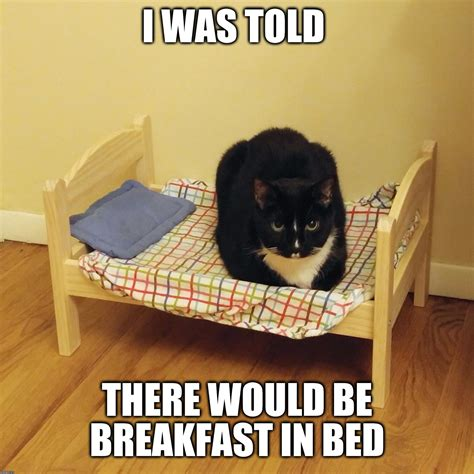 breakfast in bed meme funny cat memes imgflip
