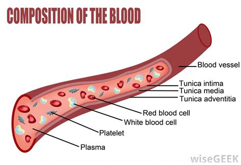 diagram of the blood vessels what is autoimmune vasculitis with pictures