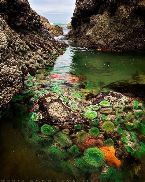 25 best ideas about tide pools on pinterest washington